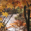 7 Biofriendly Ways to Celebrate Autumn