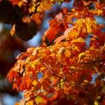 Biofriendly Blog: 50 Reasons to be Thankful