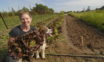 Sustainable Food: Fruits and Vegetables the Fresh, Local and Organic Way