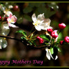 Eco-Friendly Ways to Give a Personalized Touch to Mother's Day