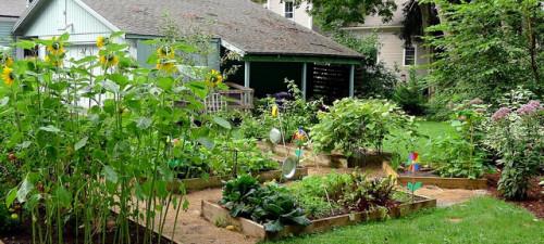 backyard garden organic produce local gmo free