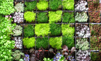 Nature Indoors: Why You Need Living Walls at Home and Work