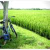 National Bike Month: Biofriendly Benefits of Riding Your Bike