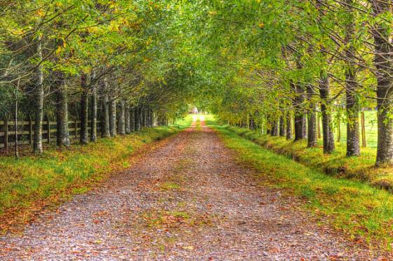 biofriendly path to sustainability