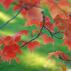 Green Actions You Can Take This Autumn