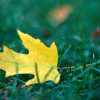 Fall Back Into Greener Habits