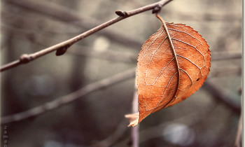 Winter's Last Leaf