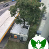 The Tree in a Gas Station   Green Wings Award