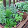 7 Natural, Biofriendly Pest Control Remedies