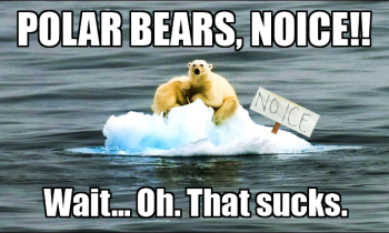 Polar Bears, Noice!!